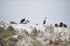 Mooie schoten van trekvogels in Antarctica stock afbeeldingen