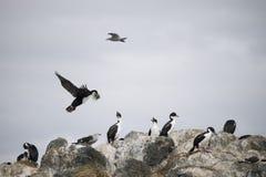 Mooie schoten van trekvogels in Antarctica royalty-vrije stock foto