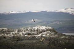 Mooie schoten van trekvogels in Antarctica royalty-vrije stock afbeeldingen