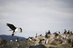 Mooie schoten van trekvogels in Antarctica stock foto