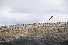 Mooie schoten van trekvogels in Antarctica royalty-vrije stock afbeelding