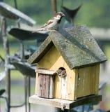 Mooie schoten van vogels in een vogelhuis stock foto