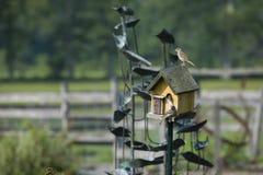 Mooie schoten van vogels in een vogelhuis stock fotografie