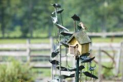 Mooie schoten van vogels in een vogelhuis royalty-vrije stock foto