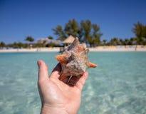 Mooie shell op een tropisch zandig strand die door een mens worden gehouden stock foto