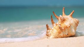 Mooie shell op wit die zandstrand door een golf wordt gewassen, sluit omhoog stock videobeelden
