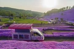 Mooie Shiba Sakura Stock Foto