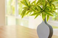 Mooie sierplantsinvaas met licht Royalty-vrije Stock Fotografie