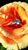 Mooie sinaasappel - de abrikoos nam met een ring toe royalty-vrije stock afbeeldingen