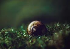 Mooie slakshell op donkergroene dichte omhooggaand als achtergrond Shell-spiraal in nat mos, macro Donker geheimzinnig beeld stock foto's