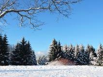 Mooie sneeuw de winterbomen, Litouwen Stock Afbeelding