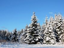 Mooie sneeuw de winterbomen, Litouwen Royalty-vrije Stock Foto's