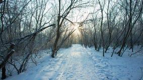Mooie Sneeuwochtend stock videobeelden