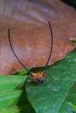 mooie spin lange hoorn op het blad royalty-vrije stock fotografie