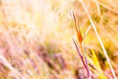 Mooie spruit van een gebiedsinstallatie van diverse kleuren De de herfstaard wordt helder en kleurrijk stock foto