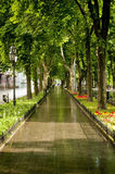 Mooie steeg in Odessa Royalty-vrije Stock Foto's
