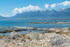 Mooie strandrots in Kaikoura met bergachtergrond, Nieuw Zeeland Stock Foto