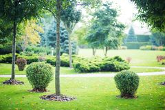 Mooie struiken in park royalty-vrije stock foto