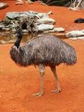 Mooie struisvogel stock fotografie