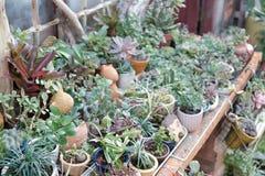 Mooie succulente installaties in tuin Royalty-vrije Stock Fotografie