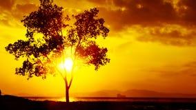 Mooie sunrises en sunsets royalty-vrije stock foto's
