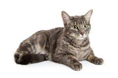 Mooie Tabby Cat Lying op Wit Royalty-vrije Stock Foto's