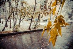 Mooie tak met oranje en gele bladeren in de recente herfst onder de sneeuw Royalty-vrije Stock Afbeelding