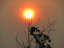Mooie tak van boomsilhouet met de achtergrond van de zonstijging stock fotografie