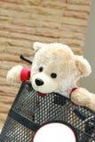 Mooie teddy in fiets Stock Fotografie