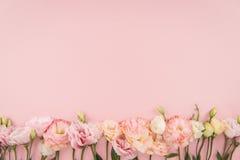 Mooie tedere bloeiende die eustomabloemen op roze achtergrond worden geïsoleerd Stock Afbeelding