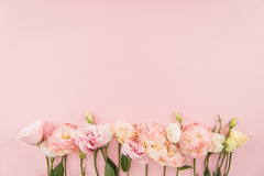 Mooie tedere bloeiende eustomabloemen op roze achtergrond Royalty-vrije Stock Afbeeldingen