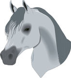 Mooie tekening, hoofd van paard stock illustratie