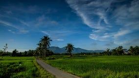 Mooie tijdsplanning van het rijstveld in de buurt van het dorp in Kedah Maleisië stock footage