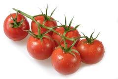 Mooie Tomaten Stock Afbeelding