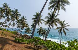 mooie toneelmening van kustlijn met palmen, Sri Lanka, mirissa royalty-vrije stock fotografie