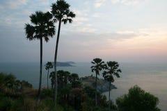 mooie toneelmening van palmen en bewolkte hemel tijdens zonsopgang royalty-vrije stock fotografie