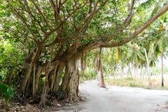 mooie toneelmening van weg en bomen met groen stock fotografie