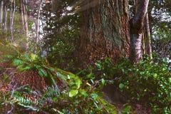 Mooie toneelscapes van Vancouver en Fraser Valley royalty-vrije stock foto