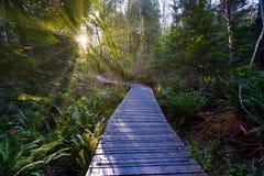 Mooie toneelscapes van Vancouver en Fraser Valley royalty-vrije stock afbeeldingen