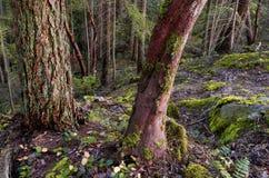 Mooie toneelscapes van Vancouver en Fraser Valley royalty-vrije stock afbeelding