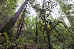 Mooie toneelscapes van Vancouver en Fraser Valley Scenic Backgrounds stock foto