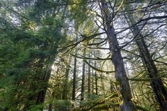 Mooie toneelscapes van Vancouver en Fraser Valley Scenic Backgrounds royalty-vrije stock afbeeldingen