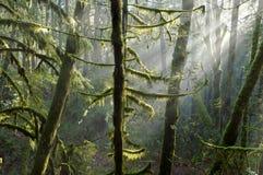 Mooie toneelscapes van Vancouver en Fraser Valley Scenic Backgrounds royalty-vrije stock fotografie
