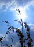 Mooie toneelzon die uit van achter de wolk met wild gras piepen stock fotografie