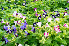 Het bloeien van de bloem stock foto's