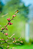 Mooie tot bloei komende boom Stock Foto