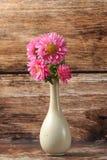 Mooie tot bloei komende chrysanten Royalty-vrije Stock Foto