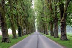 Mooie tree-lined weg Royalty-vrije Stock Fotografie