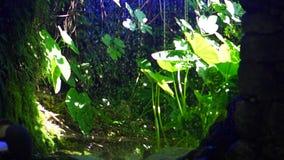 Mooie tropische achtergrond met installaties en waterval stock video