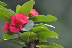 Mooie tropische bloem Stock Afbeeldingen